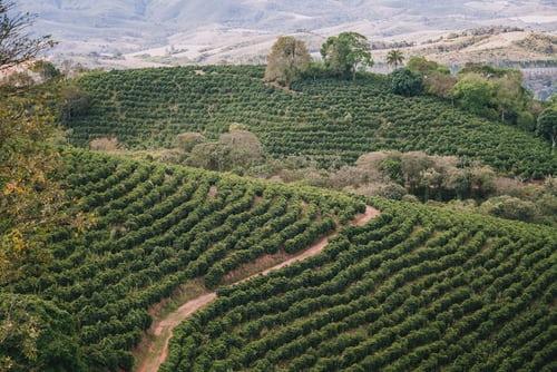 Ảnh hưởng của độ cao đến cây cà phê | PrimeCoffee