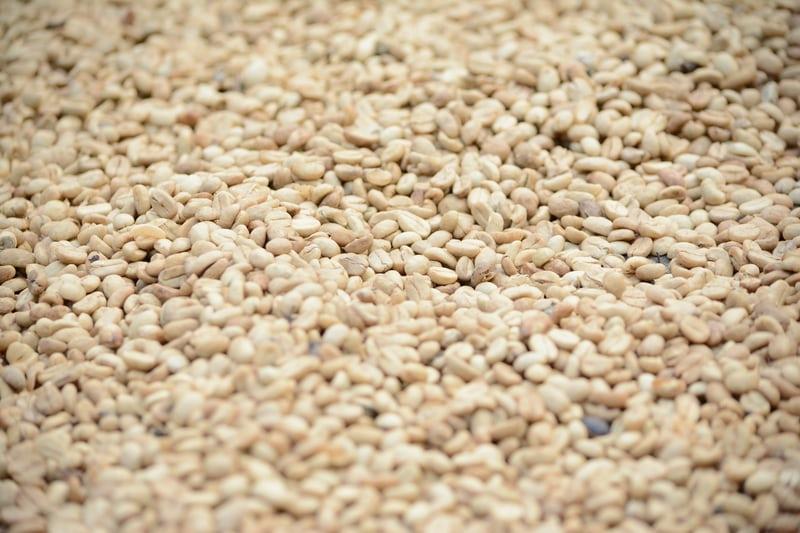 Read more about the article Cà phê chế biến ướt là gì? Quá trình lên men ướt cà phê