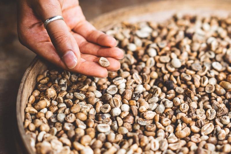 Read more about the article Kỹ thuật chế biến mật ong (chế biến bán ướt) trên cà phê