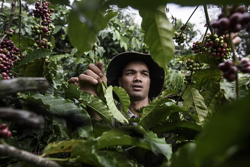 Read more about the article Thuật ngữ cà phê bền vững – Sustainable coffee