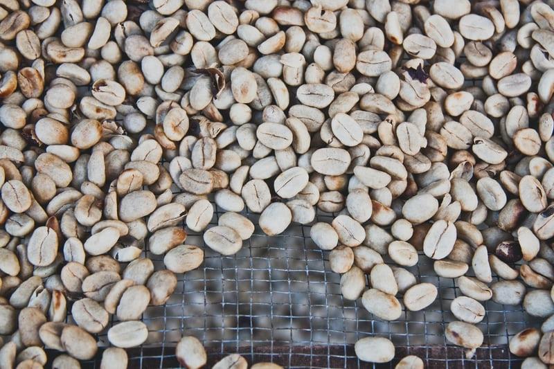 Các hệ thống phân loại cà phê cơ bản | PrimeCoffee