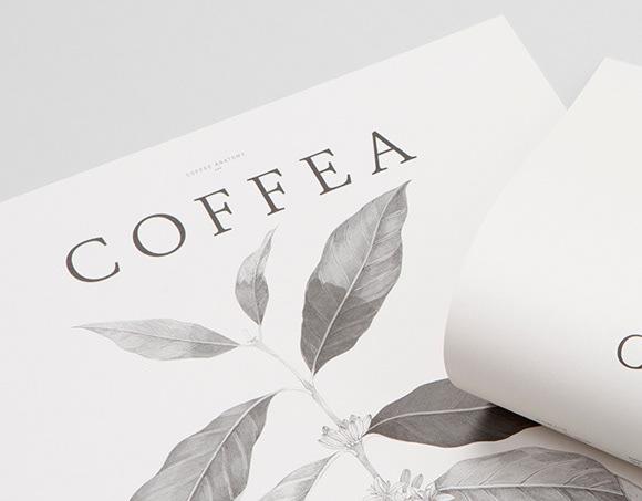 Coffee hay Cofffea, Vì sao là PrimeCoffea?