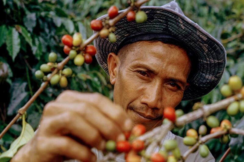 Kinh tế cà phê; Nghịch lý và Bất ổn PrimeCoffee