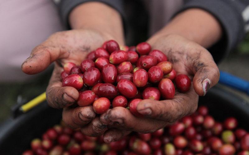 Tiềm năng hương vị và chất lượng cà phê | PrimeCoffee