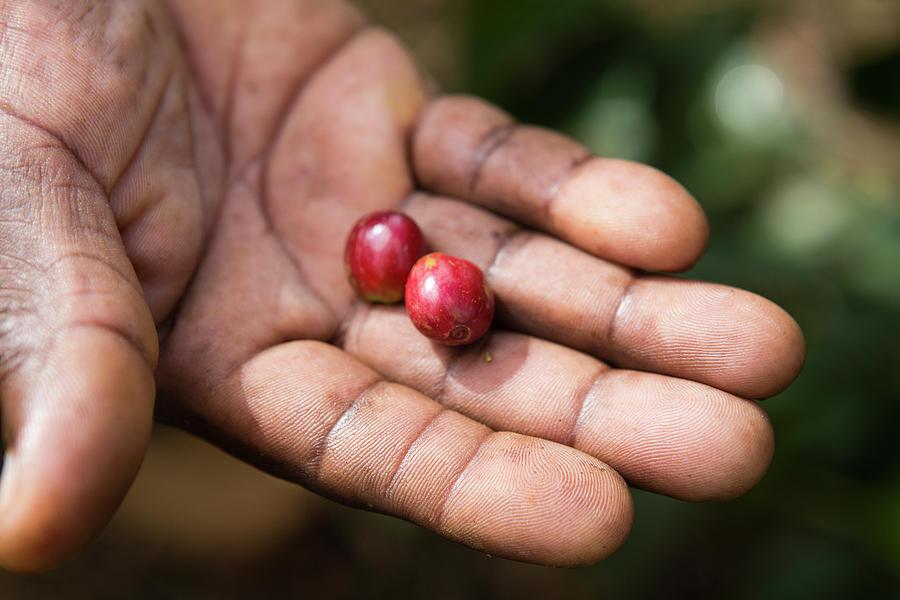 Read more about the article Nguồn gốc của cà phê thương mại bình đẳng – fair trade coffee