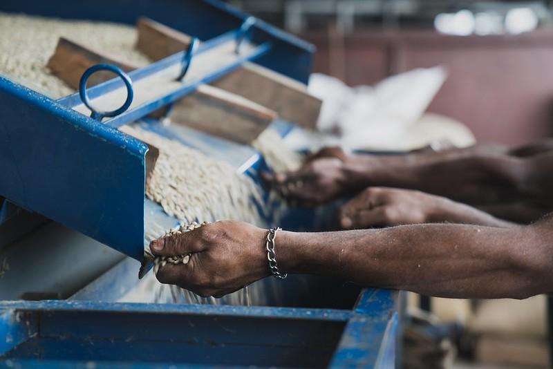 Biến động xã hội gây ra do thị trường cà phê | PrimeCoffee