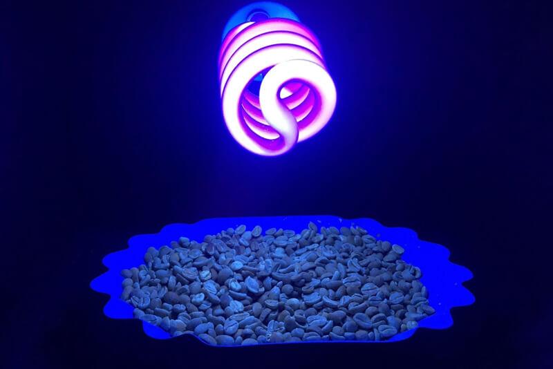 Sử dụng tia cực tím (UV) để kiểm soát chất lượng cà phê | PrimeCoffee